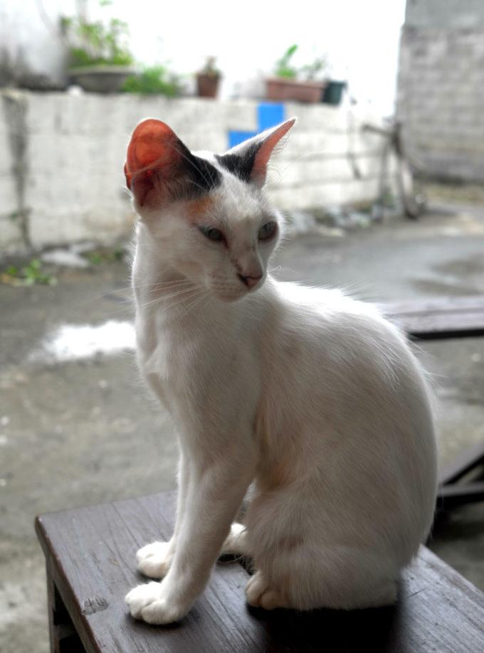 「カサ・デ・アマカ」の猫