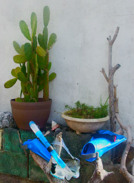 庭にあるサボテンとシュノーケリンググッズ