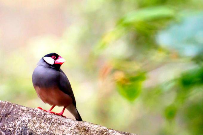 パーラーにやってきた鳥