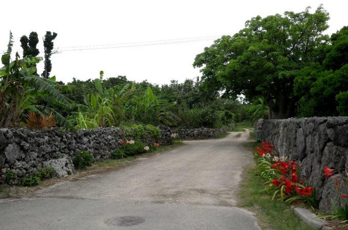 黒島の石垣に囲まれた緑の樹々