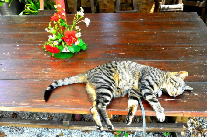 庭のデッキで寝ている猫