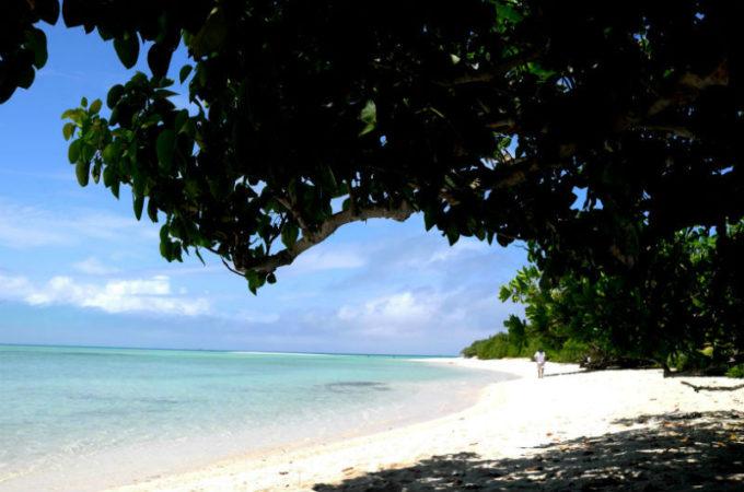 コンドイビーチの大きな木