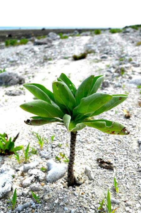 たくましいビーチの植物