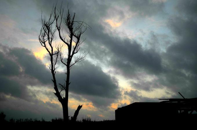 曇り空と木立