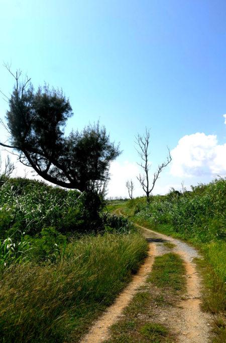 土の道と空の風景