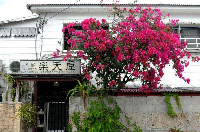赤紫の花が美しい楽天屋