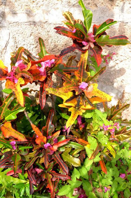 南の島ならではの鮮やかな植物