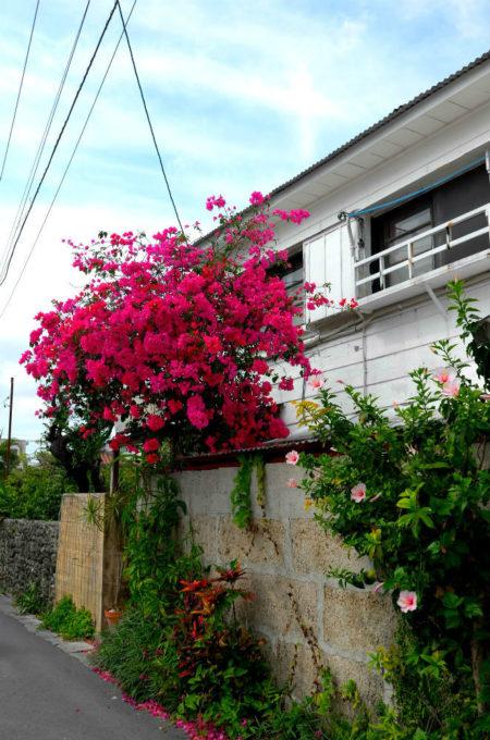 玄関前の赤い花