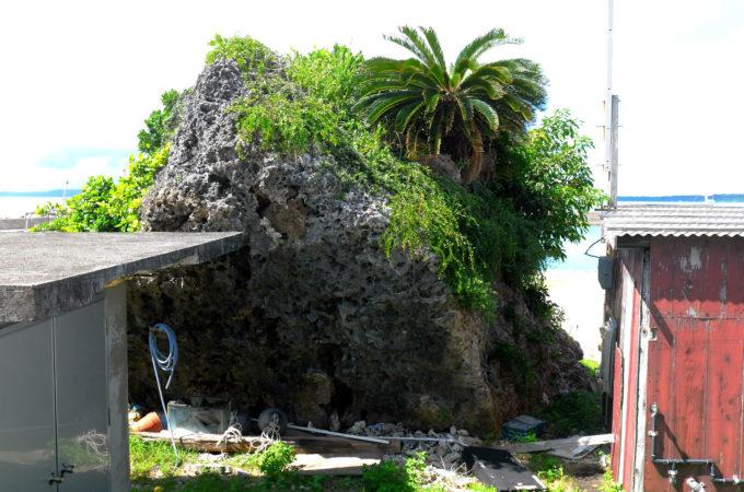 岩に生えた植物の旺盛な繁殖力