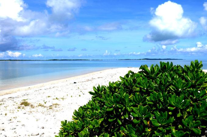 希少な白い砂浜