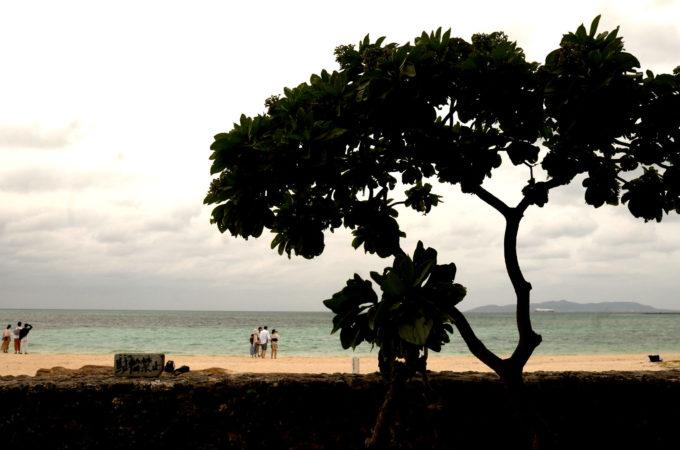 コンドイビーチと木のシルエット