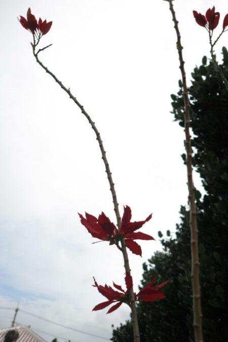 茎がやたらに長い花