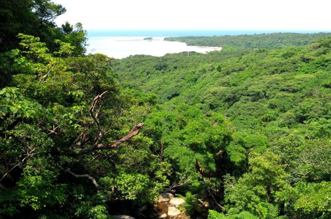 西表島の大自然