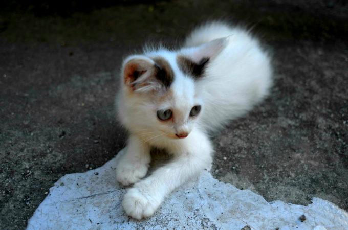 沖縄のゲストハウスにいた猫