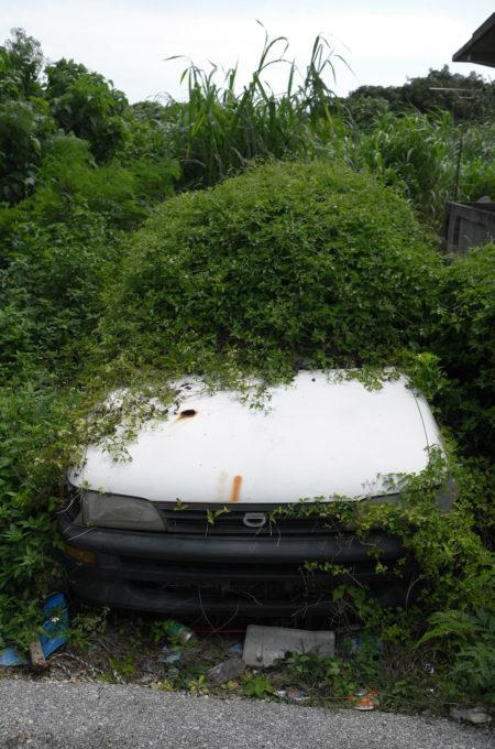 フロントガラスを草で覆われた車