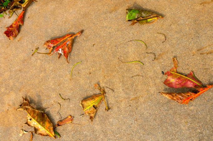 旧道の落ち葉