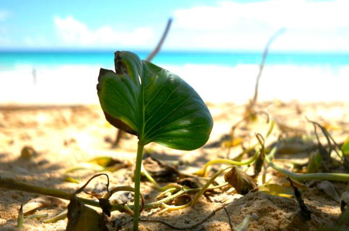 渡口の浜の植物