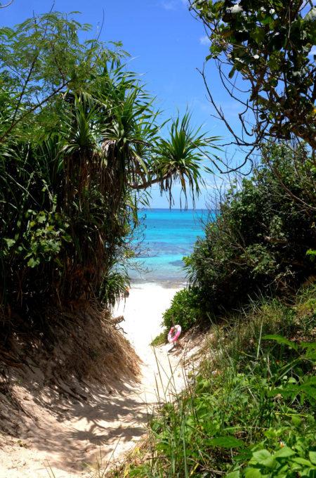 木々の間から覗く鮮やかなブルーの海