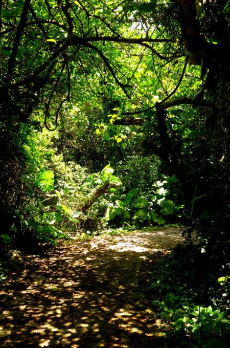 植物が鬱蒼と茂って薄暗い遊歩道
