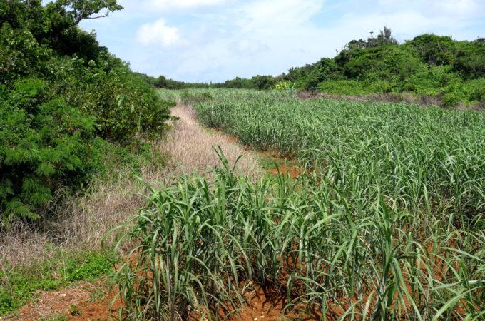 島の周回道路の内側はほとんど草木