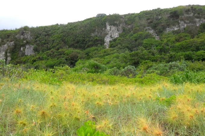 植物が活き活きと育っている野原