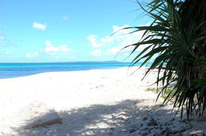 浜辺の木と影