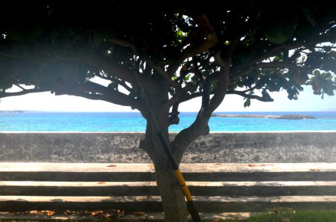 民宿の真ん前に見える木と海