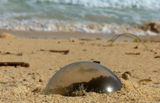 透明のボウル状のゴミ