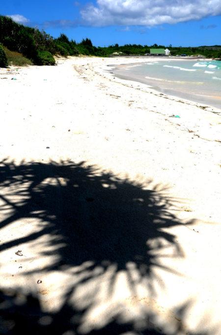 白い砂浜とアダンの影