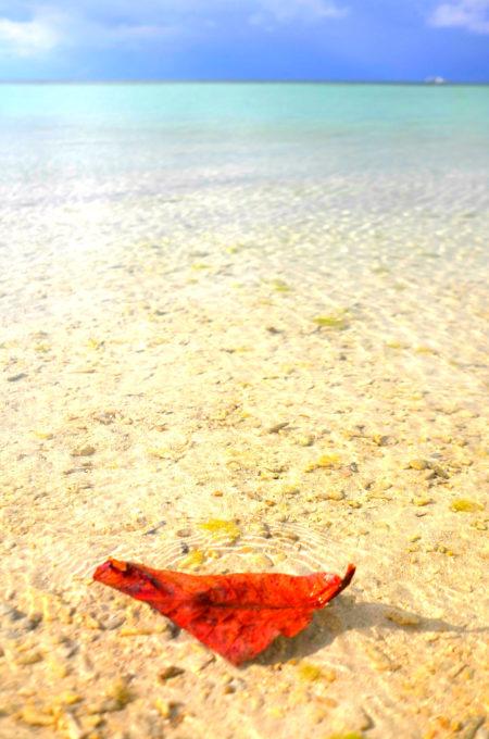 青い空と透明な海 そして、赤い葉っぱ