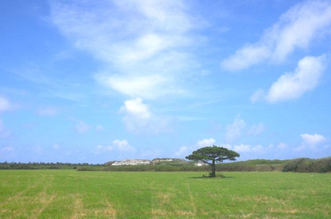 多良間島の牧草地