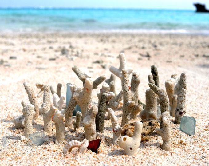 枝サンゴでつくったアートワーク