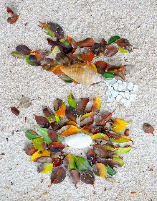 白い砂浜に落ち葉で作った鳥と巣のコラージュ