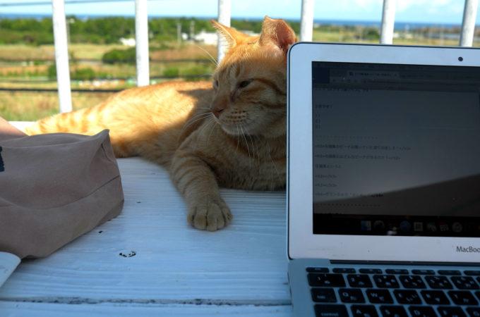 屋上テラスの猫