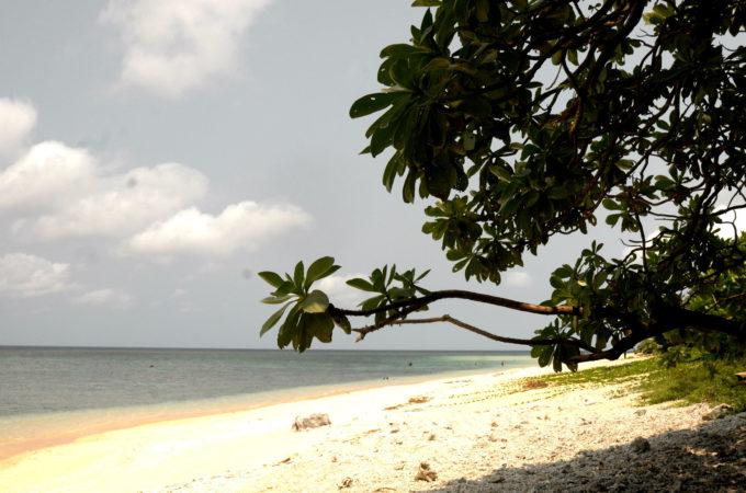 米原ビーチには日よけになる木陰があります