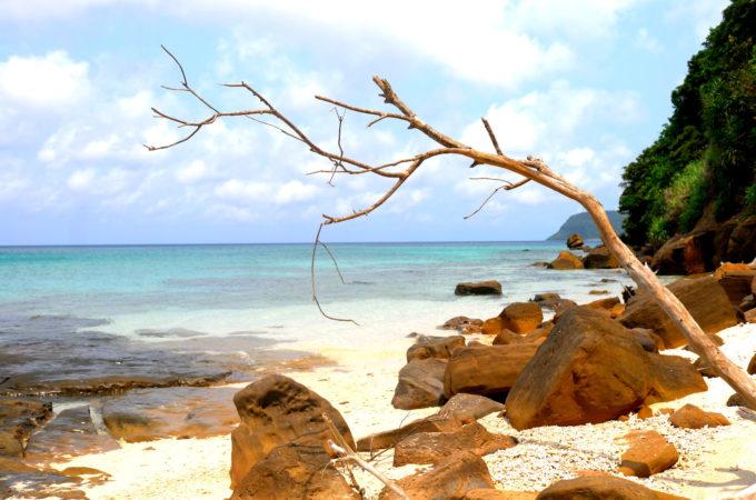木や流木がランダムに存在する岩場の風景