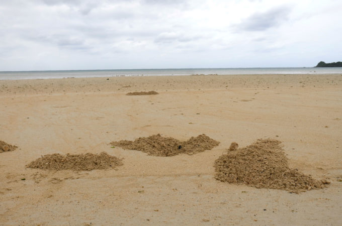 スナガニの穴の土砂