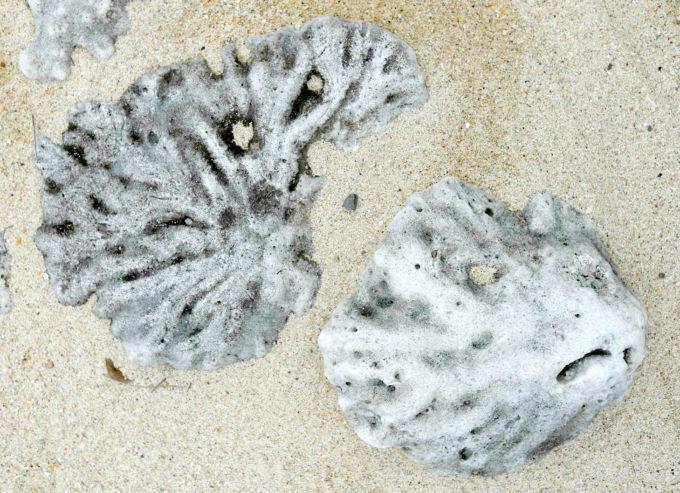緑色だったらブロッコリーっぽい浜で見つけたサンゴ