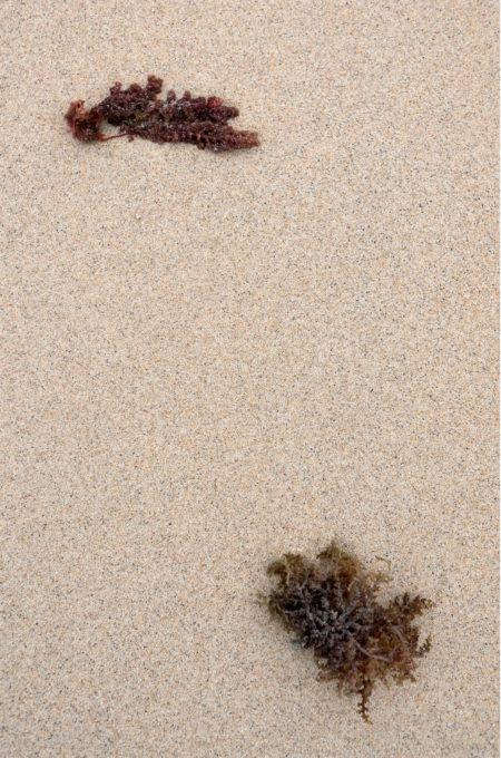距離の置いて対峙する海藻