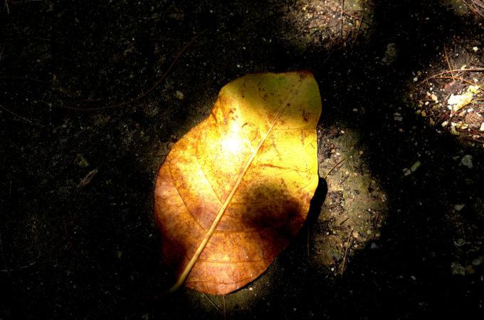 海辺の道の落ち葉