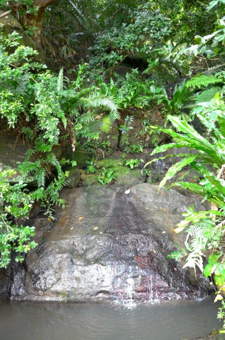 山道の湧き水