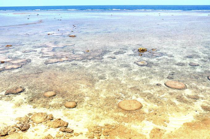 立原浜の海