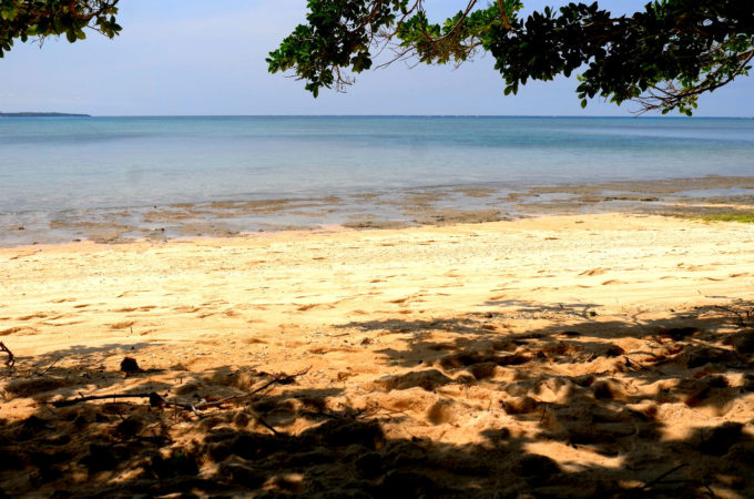 屋良浜の木陰