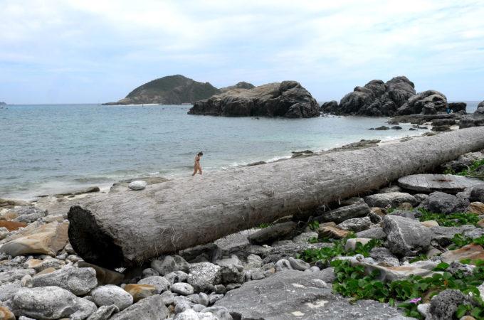 巨大な丸太が横たわる浜
