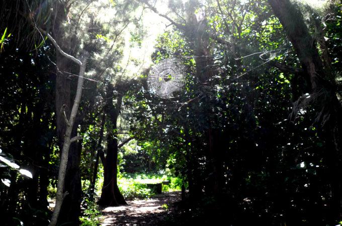 木立の間に張られた蜘蛛の巣