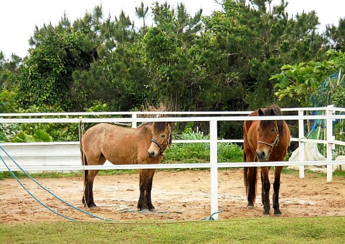 馬舎の中にいる馬