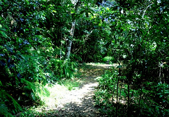 まさにジャングルの中の道です!