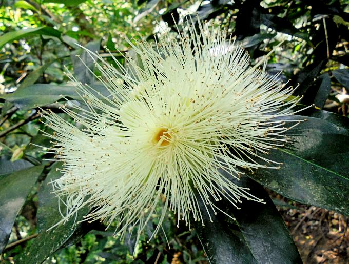 南国ならではの植物