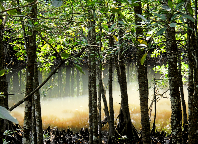 川と森の幻想的な風景