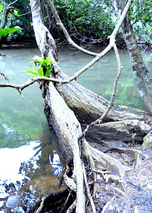 川辺の風景